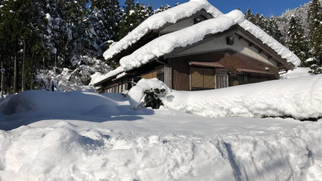 雪に埋もれたうむ